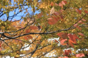 どうして食欲の秋と呼ばれるの?|役立ち情報ナビ