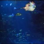 新江ノ島水族館ナイトワンダーアクアリウム|役立ち情報ナビ