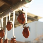 干し柿の作り方。栄養は?|役立ち情報ナビ