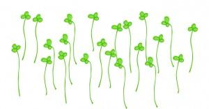 ブロッコリースプラウト/動脈硬化予防、血糖値低下、抗酸化作用の秋野菜|役立ち情報ナビ