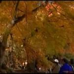 河口湖紅葉祭り|役立ち情報ナビ